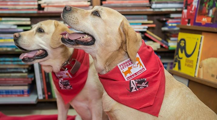 Perros y Letras - Características de un perro de lectura