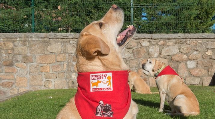 Perros y Letras - Ya estamos en Albacete y Las Palmas